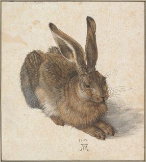 800px-Albrecht_Dürer_-_Hare,_1502_-_Google_Art_Project